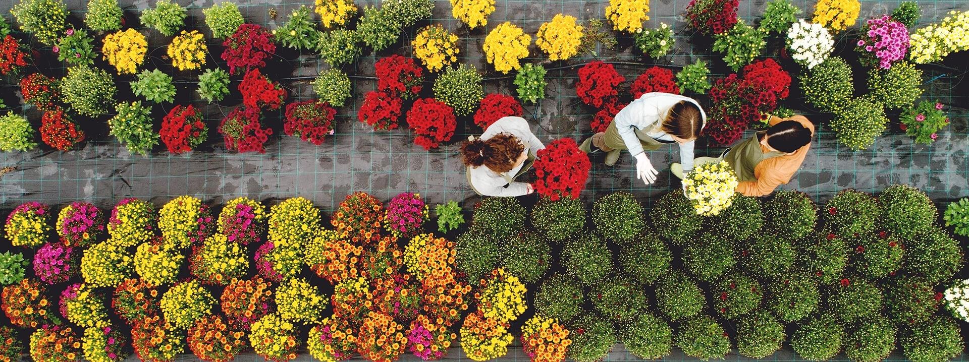 Overhead Image of Workers in Nursery
