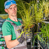 male-worker-stocking-up-plants-on-shelves-in-green-25HAMNV-_1_